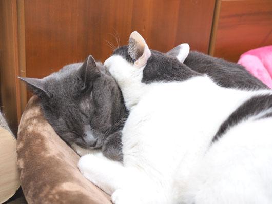 重なって眠る猫
