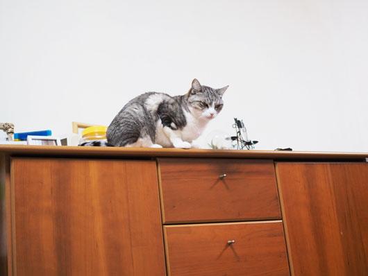 チェストの上の猫