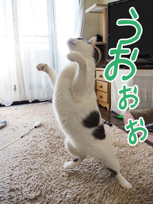 雄たけびを上げる猫