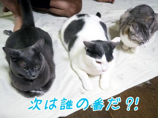 順番待ちする猫