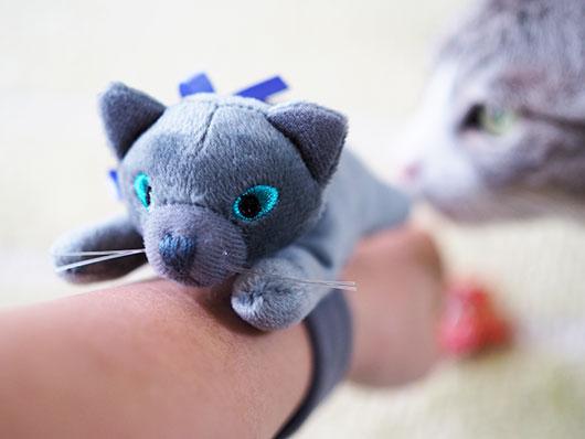 カルディのハロウィン猫