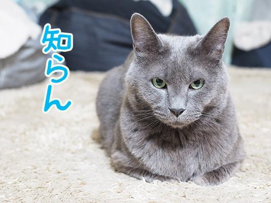 知らん顔する猫