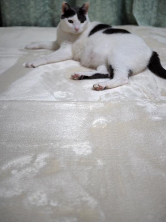 白いラグと猫
