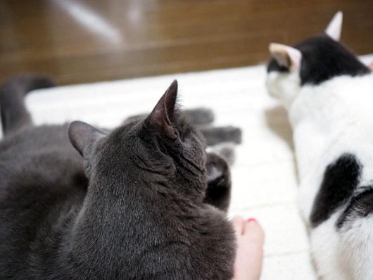 猫に足を踏まれる幸せ