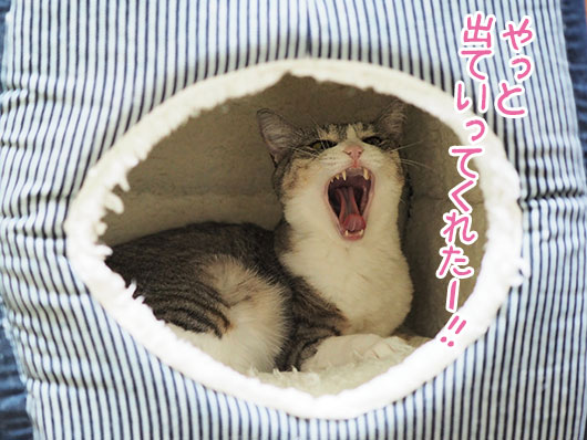 キャットハウスの中の猫