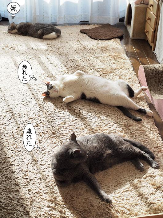 寝転がる猫