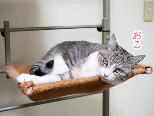 キャットウォークの猫