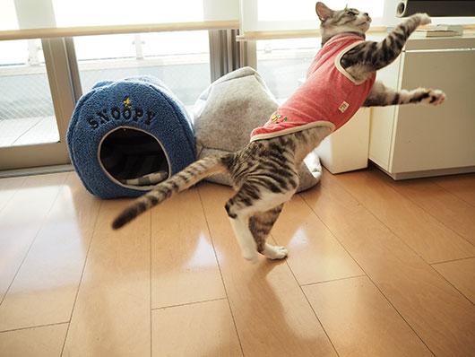 服を着た猫