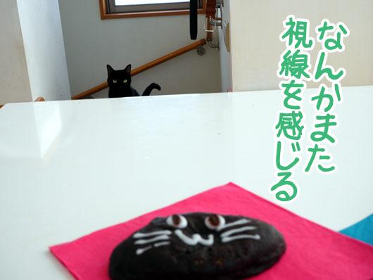 猫のパンを狙う猫