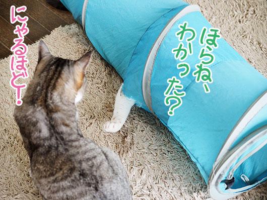 説明する猫