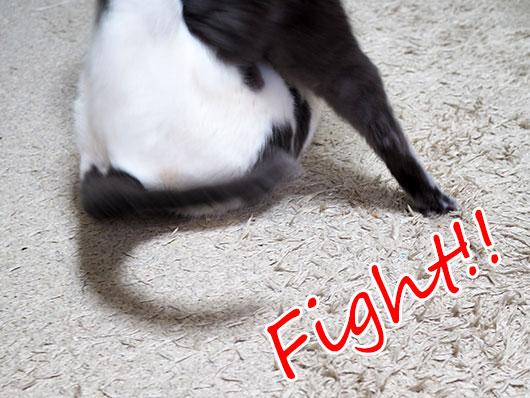 ケンカする猫