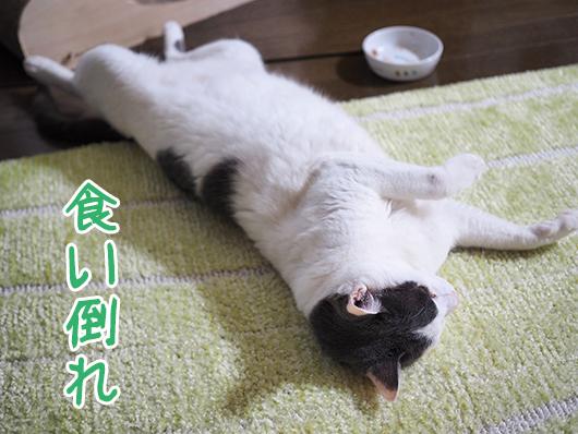 食い倒れ猫