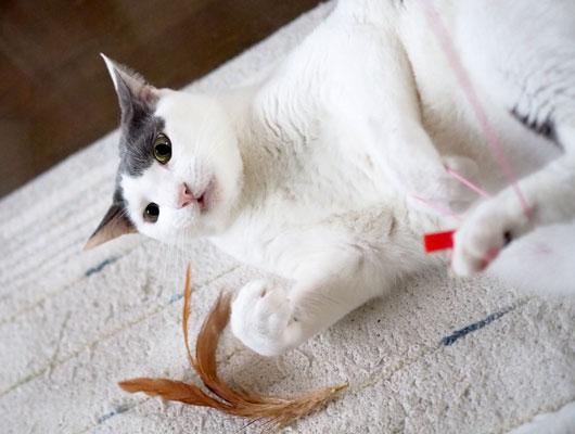 猫じゃらしを壊した猫