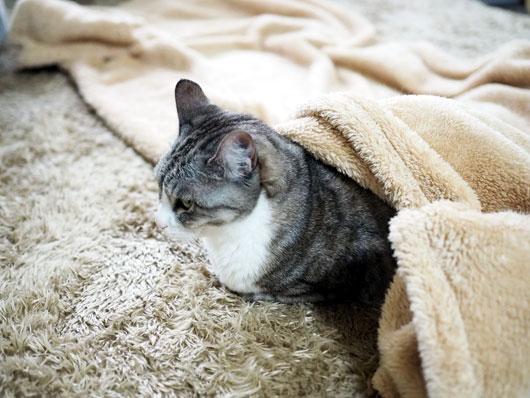寒がりな猫