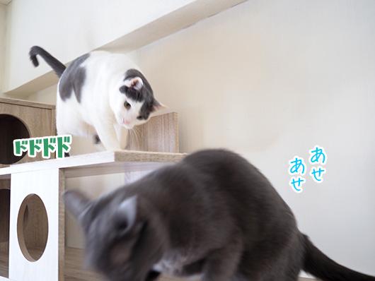 突進する猫