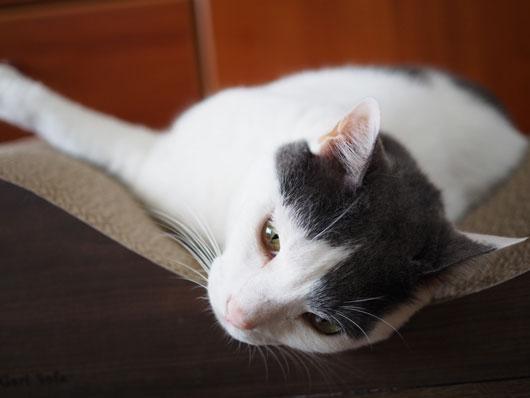 爪とぎの上の猫