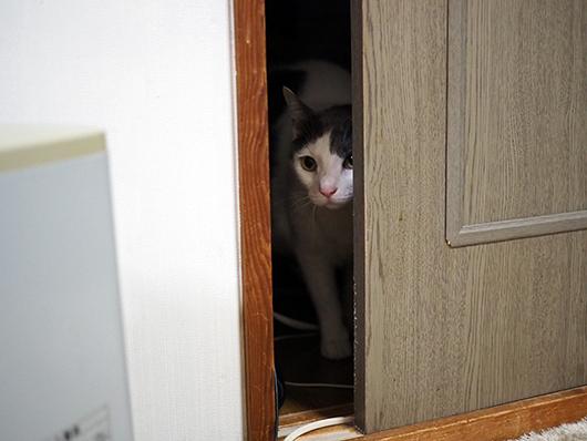 覗き込む猫