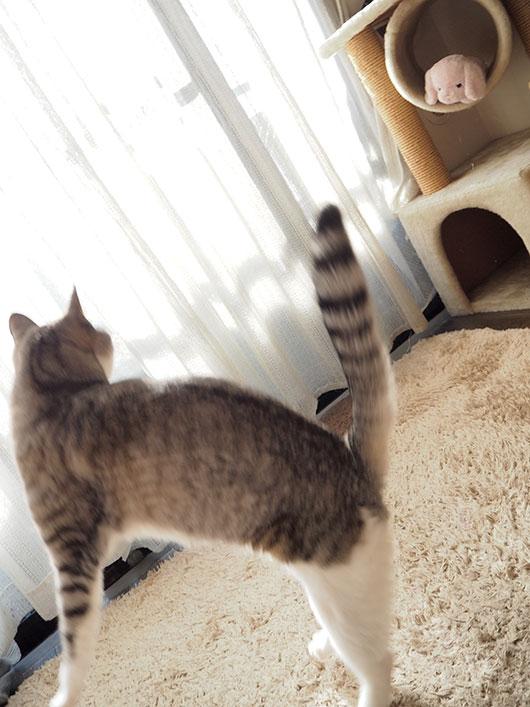 ブンブンしっぽの猫