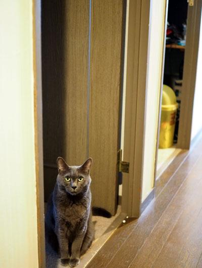 見送りする猫