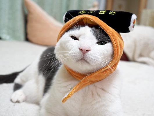 恵方巻の猫