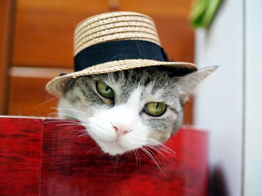 麦わら帽の猫