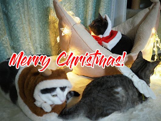 ねこ3クリスマス