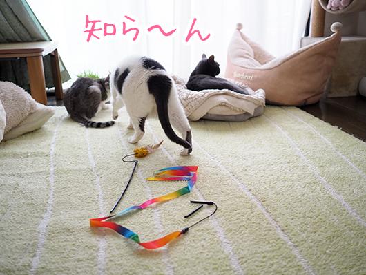 折れた猫じゃらし