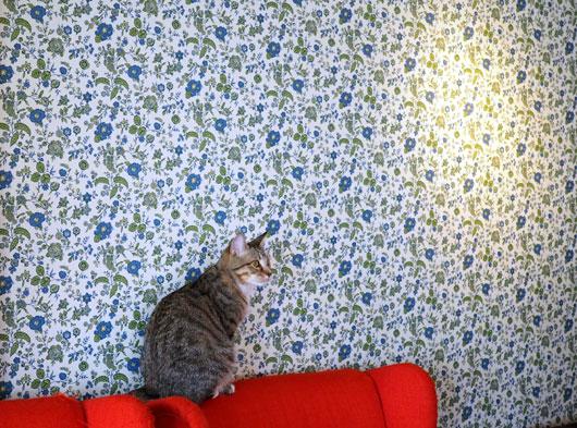 猫カフェMONTAの猫