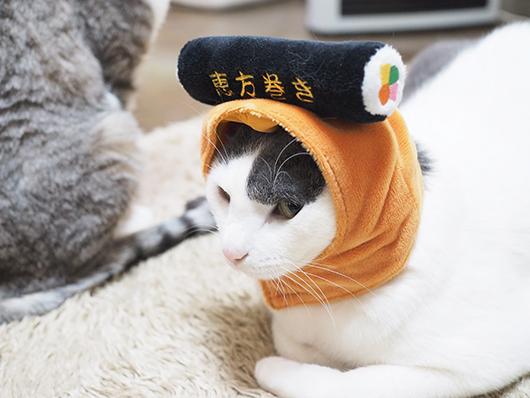 節分のコスプレをする猫