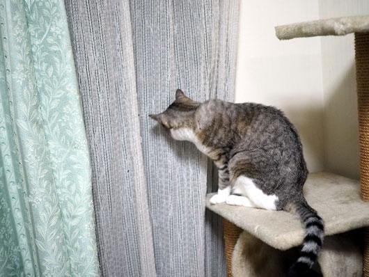台風が気になる猫
