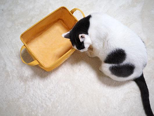 カゴに入りたい猫