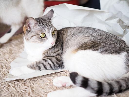 白い紙と猫