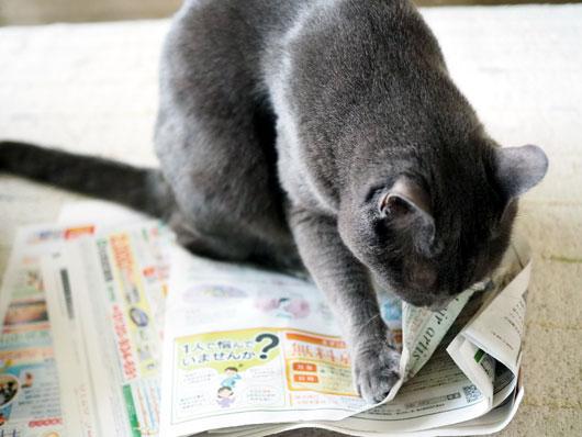新聞紙の上の猫