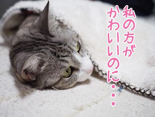 ひがんでいる猫