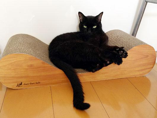 爪とぎソファと猫