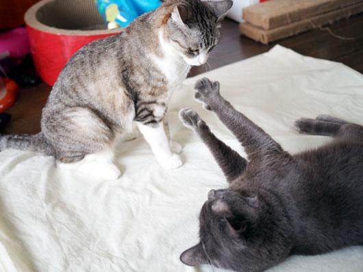 ブロックする猫
