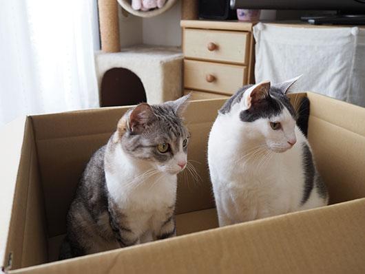 箱にはいる猫