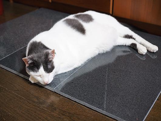 御影石で涼む猫