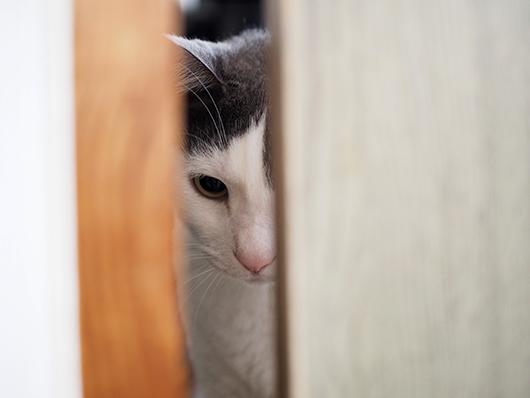 閉じ込められた猫