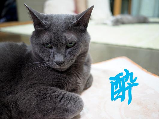 マタタビ酔いの猫