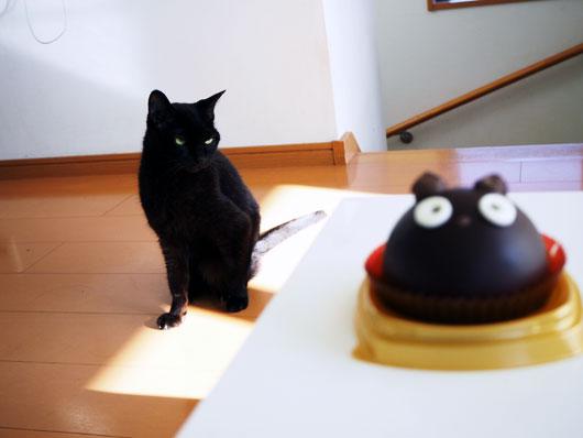 ハロウィンケーキを狙う猫