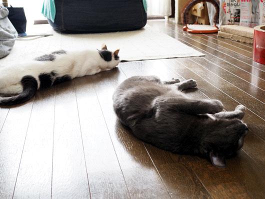 床に転がる猫