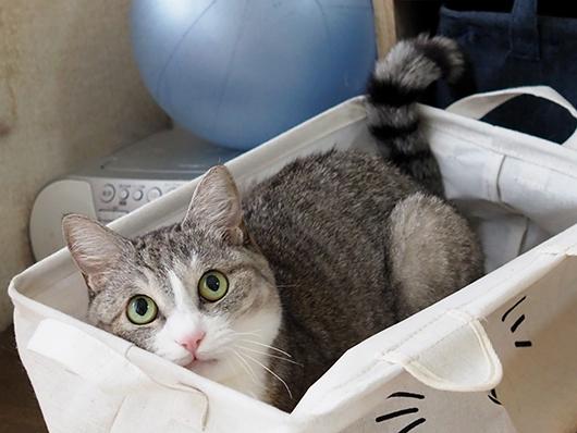 猫じゃらしを狙う猫