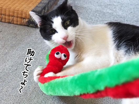 猫と猫じゃらし