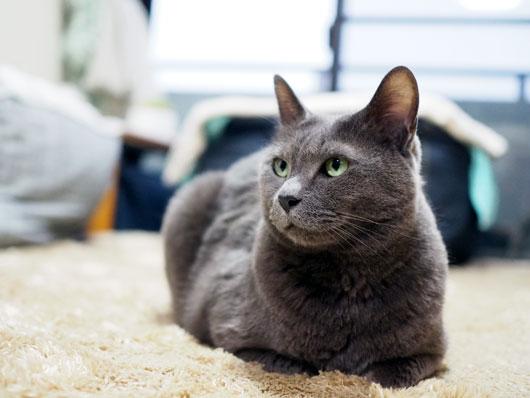 ホットカーペットと猫