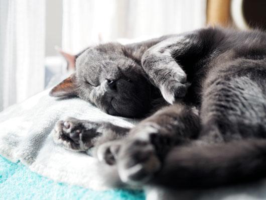 日光浴する猫