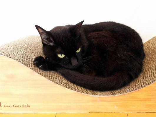 黒猫と爪とぎソファ