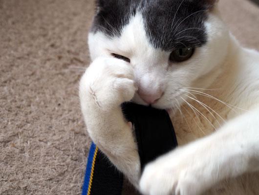 ストラップと遊ぶ猫