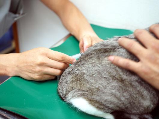 注射する猫