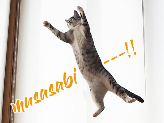 ムササビ猫